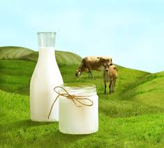 Grass-fed whey protein concentrate…What's the difference?