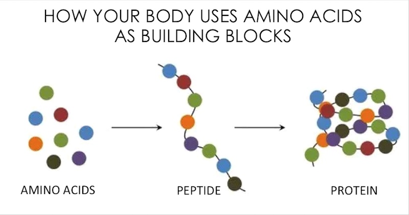 There is a lot of misinformation about protein and amino acids.
