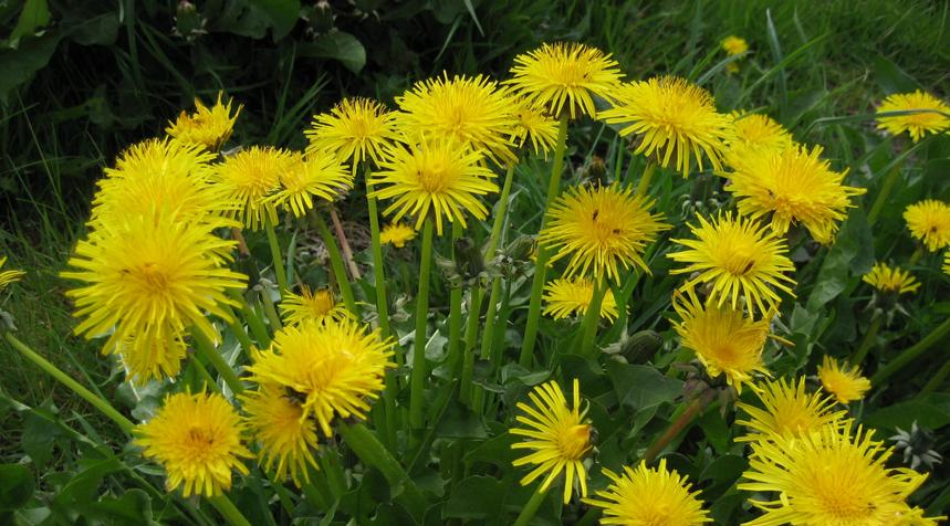best herbs, healing herbs, herbs plants, herbs and spices, best herbs for eyes, best herbs for hair growth